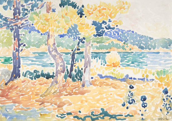 Drawing - Pines On The Coastline by Henri-Edmond Cross
