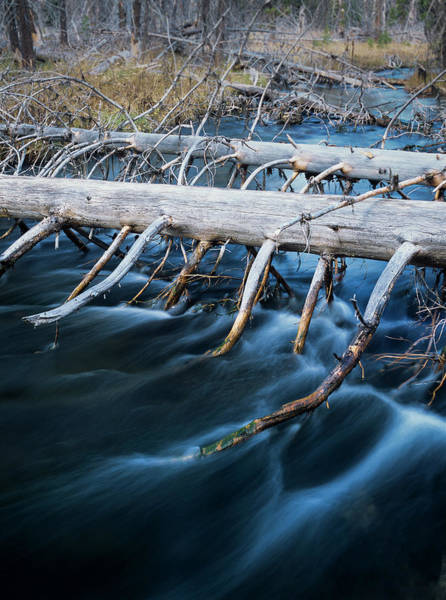 Photograph - Pines Over The River by Robert Potts