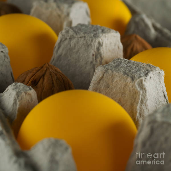 Photograph - Ping Pong Nuts by Rolf Bertram