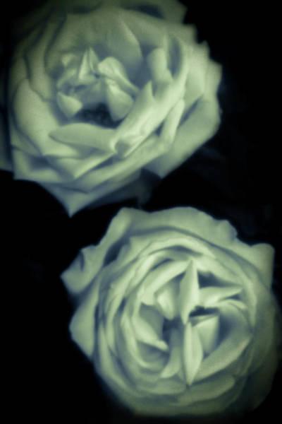 Photograph - Pinhole Rose 3004 by Rudy Umans
