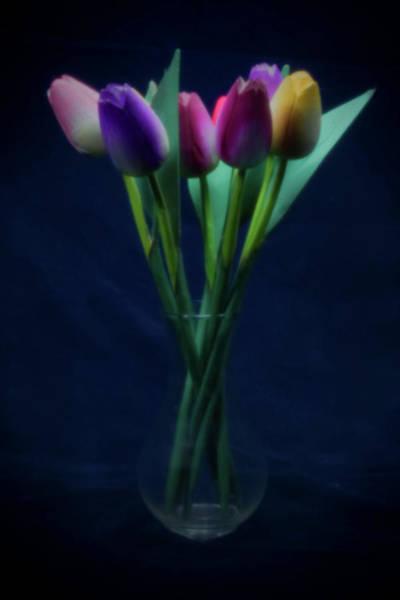 Photograph - Pinhole Tulips by Rudy Umans