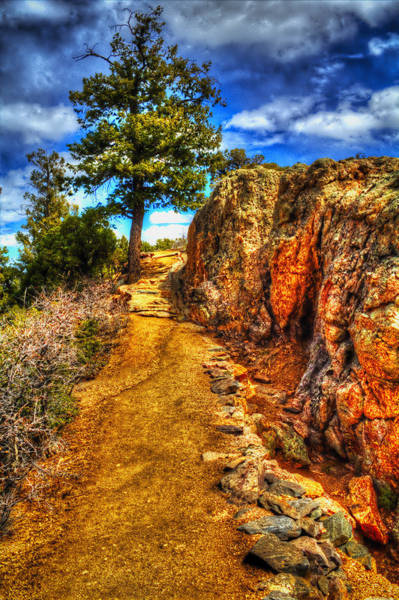 Ponderosa Pine Guarding The Trail Art Print