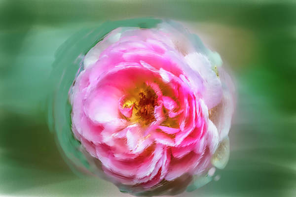 Photograph - Pink #a5 by Leif Sohlman