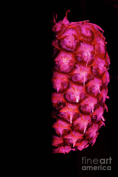 Photograph - Pink Abstract Pineapple by Tracey Everington