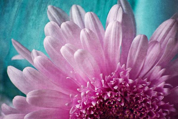 Pink And Aqua Art Print