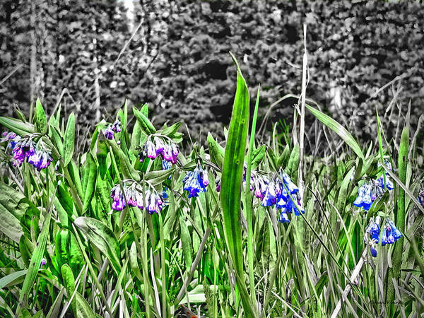 Digital Art - Pink And Blue Wild Flowers by Susan Kinney