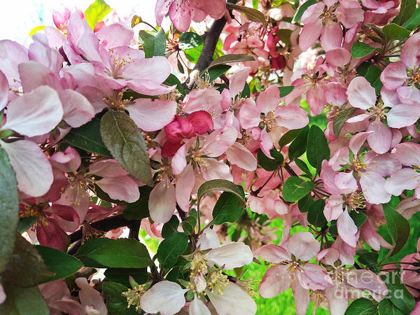 Photograph - Pink And Green 2 by Robert Knight