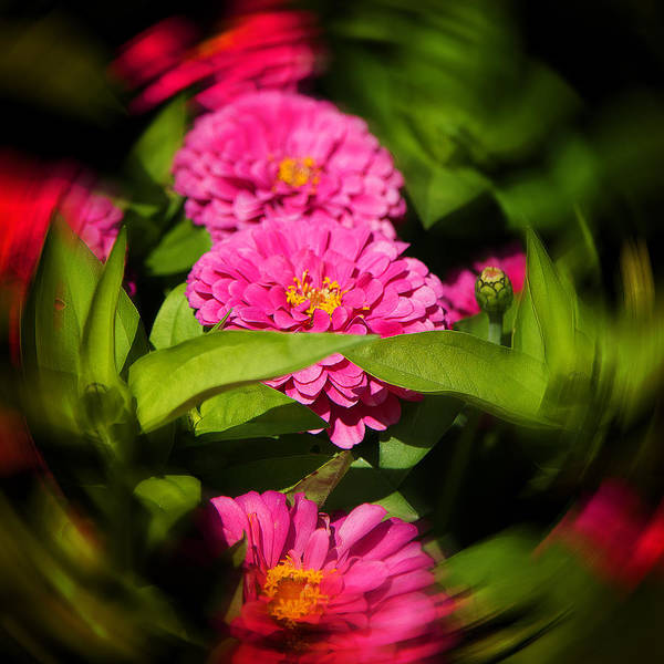 Photograph - Pink And Green by Milena Ilieva