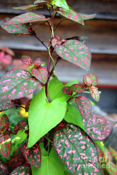 Photograph - Pink And Green Plants by Jacqueline Athmann