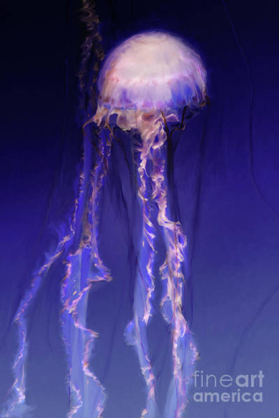 Digital Art - Pink And Purple Jellyfish by Lisa Redfern