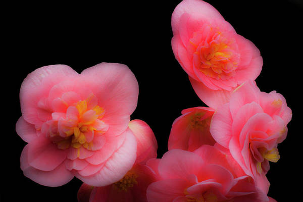 Photograph - Pink And Red 1 by Lee Santa