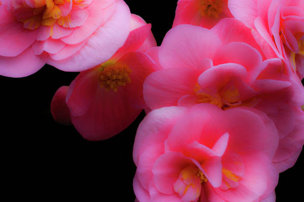 Photograph - Pink And Red 2 by Lee Santa