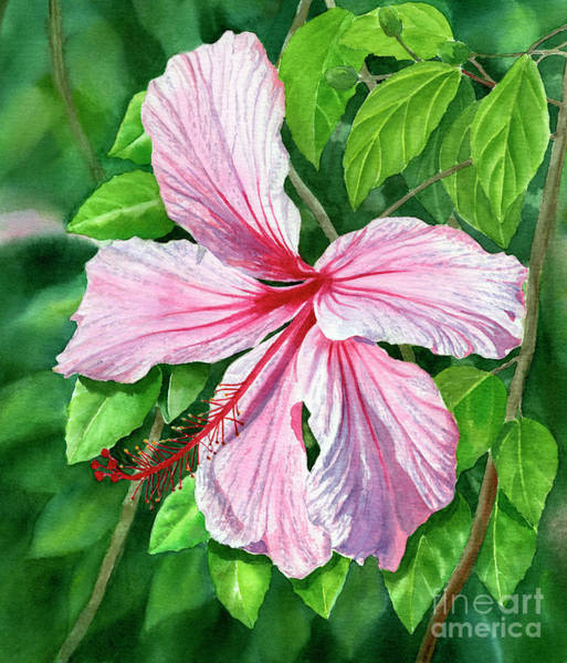 Wall Art - Painting - Pink And Red Hibiscus by Sharon Freeman