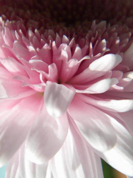 Pink And White Art Print by Alyona Firth