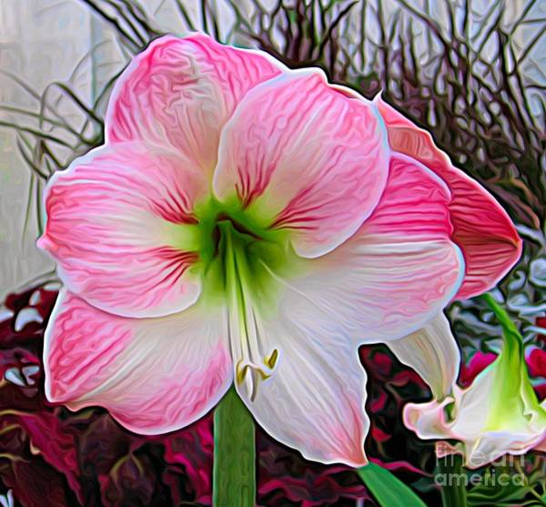 Photograph - Pink And White Amaryllis Flower Expressionist Effect by Rose Santuci-Sofranko