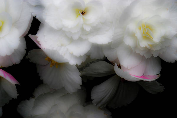 Photograph - Pink And Yellow On White 4 by Lee Santa