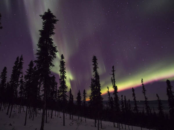 Photograph - Pink Aurora by Ian Johnson