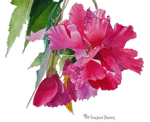Wall Art - Painting - Pink Begonia by Pat Yager