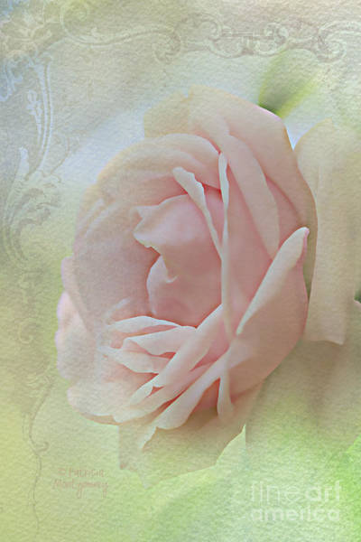Photograph - Pink Bliss by Patricia Montgomery