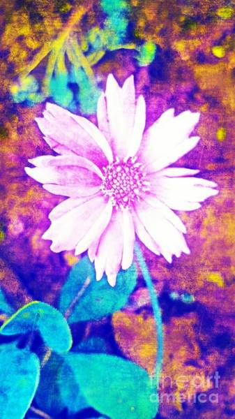 Photograph - Pink Bloom by Rachel Hannah