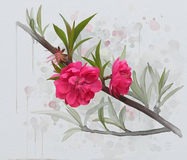 Painting - Hot Pink Blossom by Ivana Westin