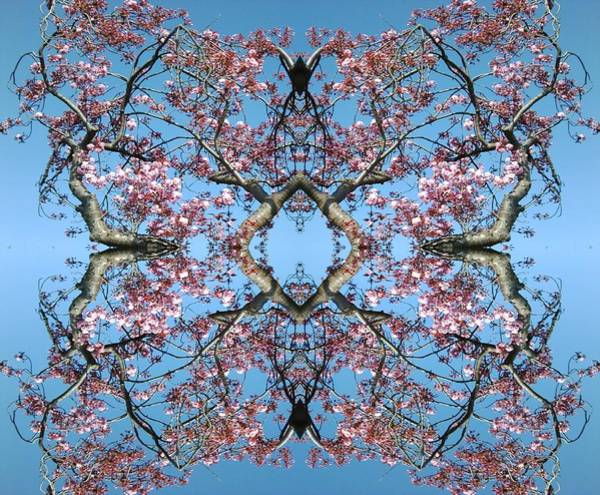 Photograph - Pink Blossom Mandala by Julia Woodman