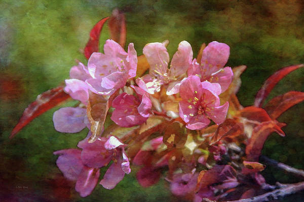 Photograph - Pink Blossoms Amber Leaves 9639 Idp_2 by Steven Ward