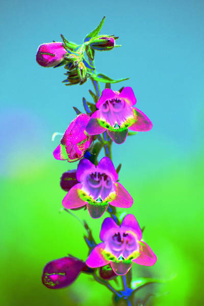 Photograph - Pink Blue Green Yellow  by Richard Henne