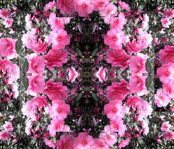 Photograph - Pink Bush Flower Composite by Julia Woodman
