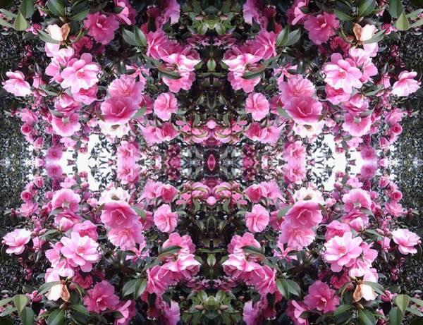 Photograph - Pink Bush Flower Mandala 1 by Julia Woodman