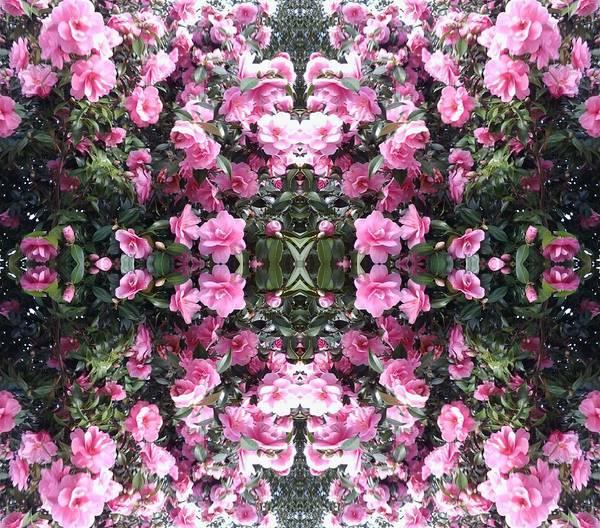 Photograph - Pink Bush Flower Mandala 2 by Julia Woodman