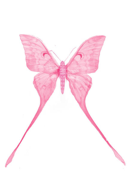 Butterfly On Flower Digital Art - Pink Butterfly by Art Spectrum