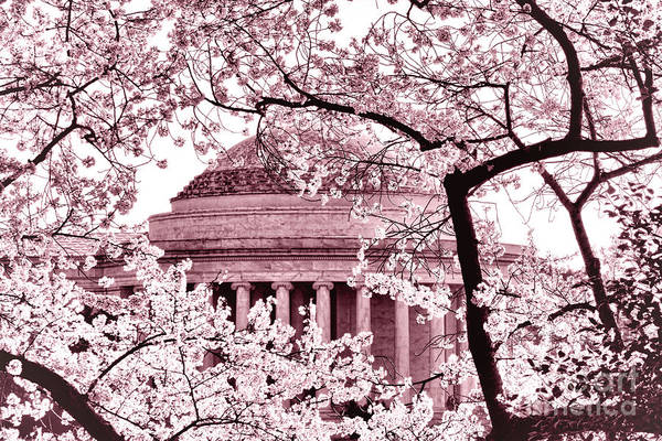 Wall Art - Photograph - Pink Cherry Trees At The Jefferson Memorial by Olivier Le Queinec