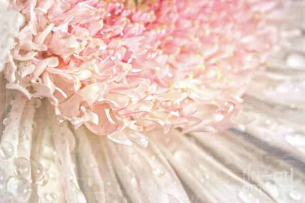 Wall Art - Photograph - Pink Chrysanthemum With Antique Distress by Sandra Cunningham