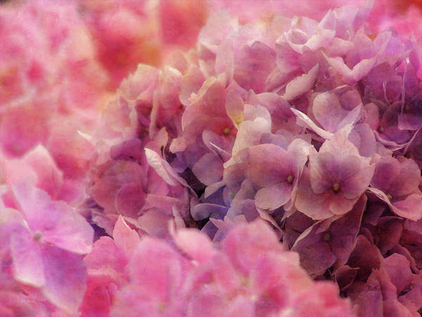 Photograph - Pink Clouds 2071 Idp_2 by Steven Ward