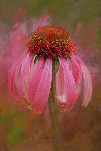 Spring Mountains Mixed Media - Pink Coneflower by Isabela and Skender Cocoli