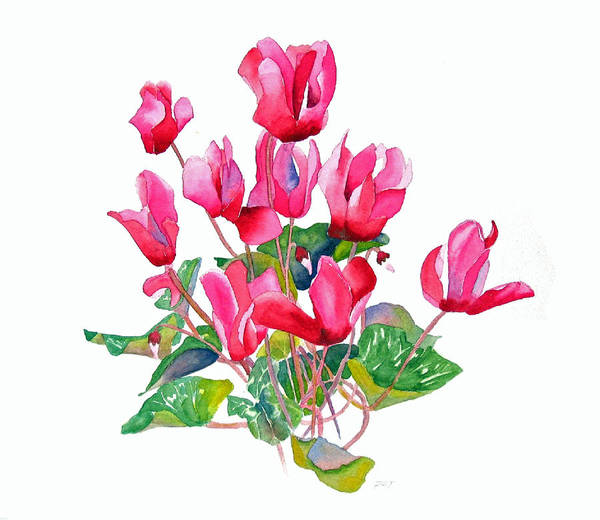 Wall Art - Painting - Pink Cyclamen by Pat Yager