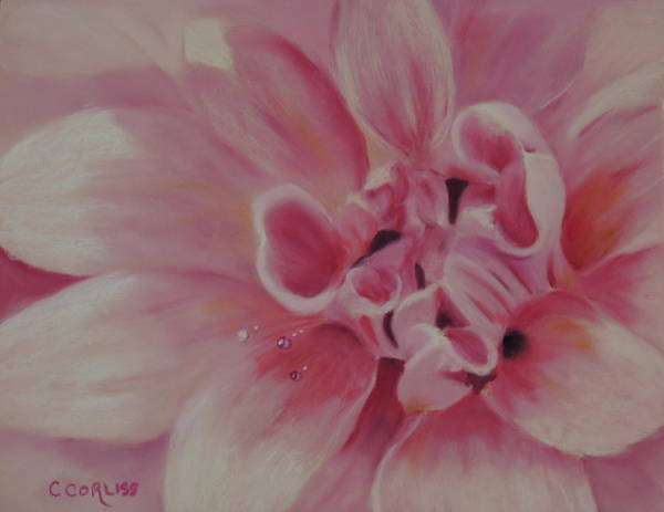 Pastel - Pink Dahlia II by Carol Corliss