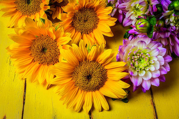 Softly Photograph - Pink Dahlias And Sunflowers by Garry Gay