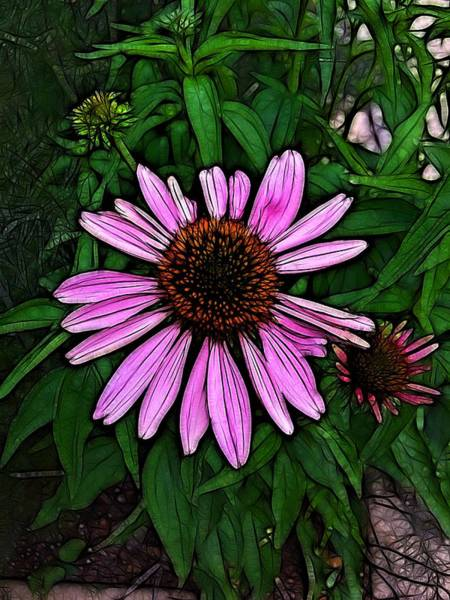 Photograph - Pink Daisey by Nick Heap