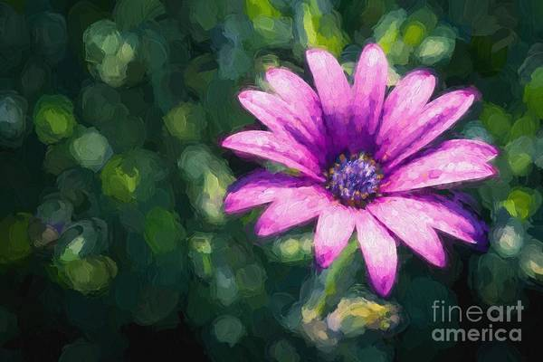 Photograph - Pink Daisy by Ray Warren