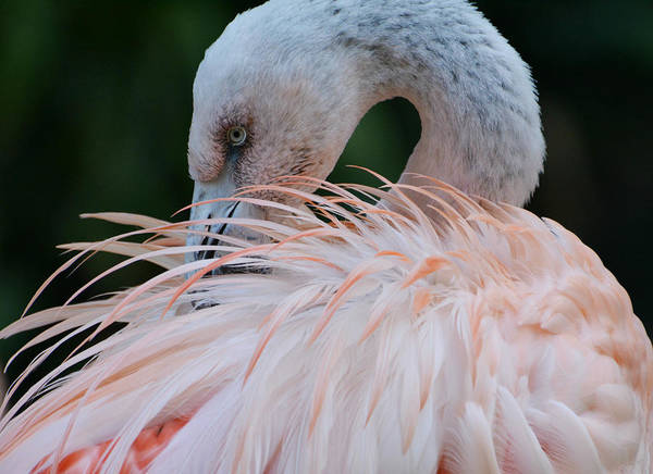 Photograph - Pink Darkness 2 by Fraida Gutovich