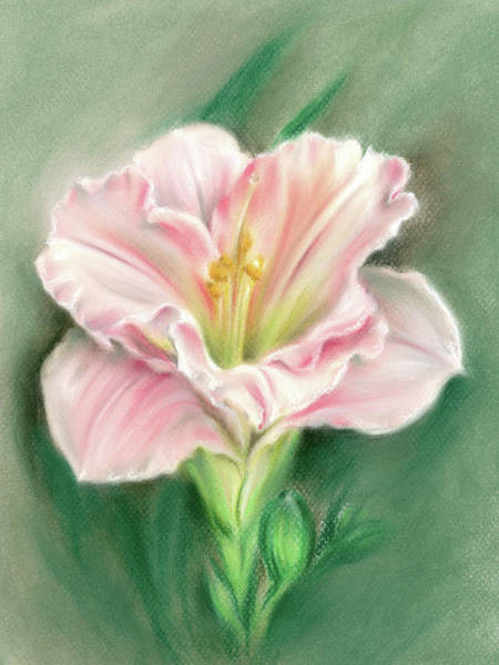 Pastel - Pink Daylily And Green Buds by MM Anderson