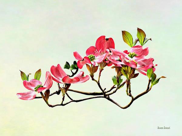Photograph - Pink Dogwood by Susan Savad