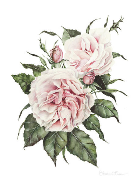 Country Wedding Painting - Pink English Roses by Shealeen Louise