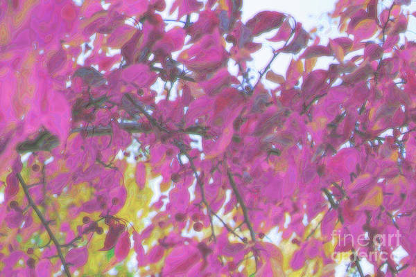 Digital Art - Pink Fall Branches by Donna L Munro