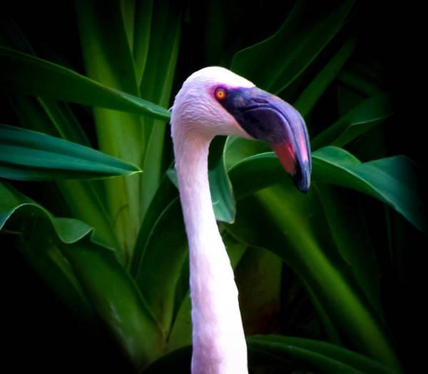 Photograph - Pink Flamingo Bliss by Karen Wiles