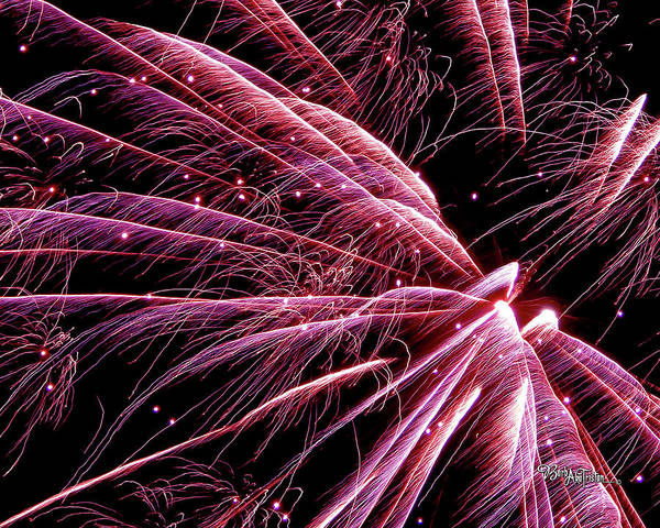 Photograph - Pink Flamingo Fireworks #0710 by Barbara Tristan
