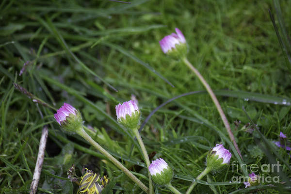 Photograph - Pink Floral In Grass by Donna L Munro