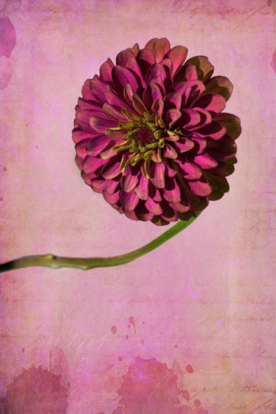 Wall Art - Photograph - Pink Flower 1 by Kevin O'Hare